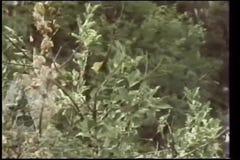 Wide shot  of skull in bushes stock video