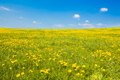 Wide shot of spring meadow Royalty Free Stock Image