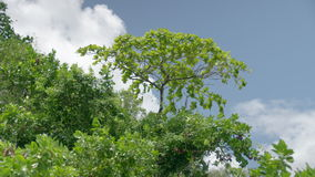 A wide shot of trees leaves. And sky stock footage
