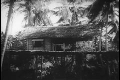 Wide shot of tropical tree house stock video footage