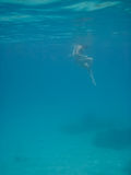 Wide Shot of Woman Snorkeler Looking Down. A female snorkeling looks down at fish and rocks in blue waters Stock Photos