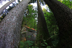 Wide Shot of a wooden hut in the forest Royalty Free Stock Images