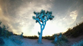 Wide sky timelapse above joshua tree stock footage