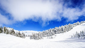 Wide Snowfields and Deep Snow Pack in the High Alpine. Ski area at Sun Peaks in the Shuswap Highlands of central British Columbia, Canada Royalty Free Stock Images