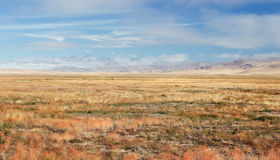 A wide steppe with yellow grass on the Ukok plateau Stock Photography