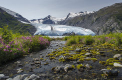 Wide stream flowing into Portage Glacier Lake Royalty Free Stock Images