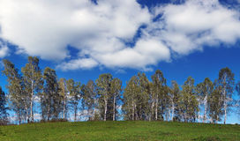 Wide summer landscape with clouds and row of birches over a hill Royalty Free Stock Photo