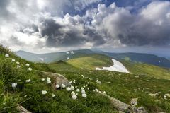 Wide summer mountain panorama. Beautiful white flowers blooming in green grass among big rocks, patches of snow in valley and moun. Tain range under low cloudy Royalty Free Stock Photography