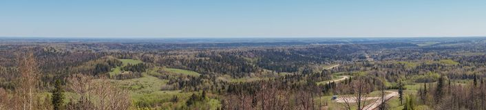 Wide Taiga Forest Spaces Panorama
