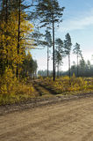 Wide track and field in the autumn forest. Wide track and field in the autumn yellow forest Royalty Free Stock Photography