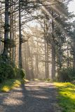 Wide Trail Through Sun Rays Stock Photography