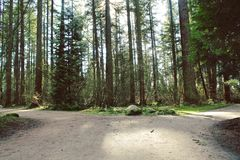 Wide trails through forest. Scenic forest with tall trees and lush foliage. Wide trails through wooded area and sunshine on pathway Stock Image