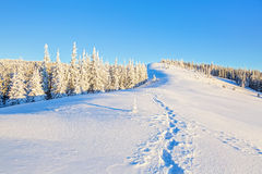 Wide trampled path leads trough the glade to the forest covered with snow. Stock Image