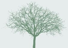 Wide tree. Vector illustration of the wide tree vector illustration