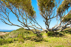 Wide tree next to sea Stock Image