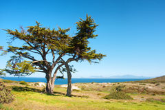 Wide tree next to sea Royalty Free Stock Photos