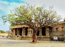 Wide tree from Vitara Temple at Hampi stock photos