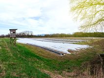 Aerial view of Asparagus plantation in spring. Wide vaerial view over asparagus plantation in rural area with multiple rows covered with sun-protecting foil Stock Photos