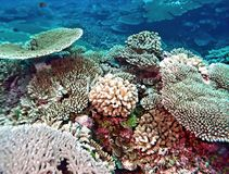 Vibrant Pacific Ocean Coral Reef. A wide variety of coral types live together on this Pacific Ocean Atoll near the Marshall Islands; Most of the coral seen here Royalty Free Stock Photography