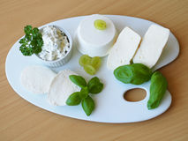 Wide variety of fresh cheeses on the porcelain plate Royalty Free Stock Photography