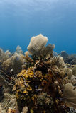 Wide variety of marine life growing from small area of coral reef like a still life painting Stock Image
