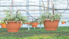 Wide variety of plants in the greenhouse stock video