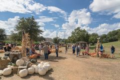 Wide variety of pumpkins decoration at local farm in Texas, Amer