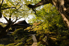 A wide variety of trees in the Japanese garden. A wide variety of trees and greenery in the Japanese garden of Ginkakuji Temple Stock Images