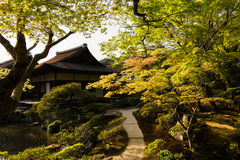 A wide variety of trees in the Japanese garden. A wide variety of trees and greenery  in the Japanese garden of Ginkakuji Temple Stock Photo