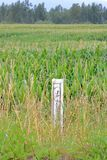 Flood Gauge and Farm Land. Wide vertical view of a flood gauge, a wooden marker that measures water levels, surrounded by farm crops royalty free stock photography