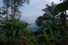 Wide view of banana plants and jungle in Kwanza Sul, Angola stock images