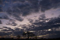 Wide view of cloudy Namibian sky and tree silhouettes against sunrise stock images