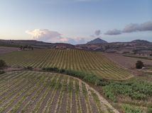 Wide view of a cultivated field. Cultivated field seen from above royalty free stock photo