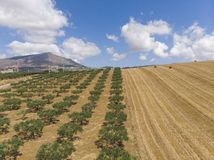 Wide view of a cultivated field. Cultivated field seen from above stock image