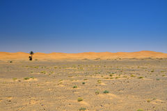 Wide view of the edge of the  desert Royalty Free Stock Image