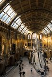 Wide view of the entrance to the Natural History Museum. Large blue whale skeleton on display and stunning architecture. London, UK - March 19, 2018: Wide view royalty free stock images