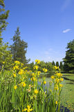 Wide view of flowers Royalty Free Stock Images