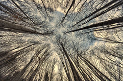 Wide view of forest Stock Images