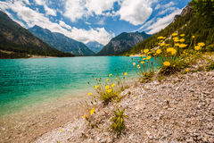 Wide view of lake Plansee with dandelions in front. Austria Stock Photography