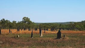 Wide view of magnetic termite mound in the northern territory