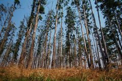Wide view of Malanje Woodlands royalty free stock photo