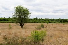 Wide view on a natural landscape with some trees in crosswise. Photographed during a sightseeing walk in the nature and surrounding of lathen Germany with wide royalty free stock photos