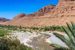 Free Wide View Of Canyon And Cultivated Fields And Palms In Errachidi Stock Images - 66370364