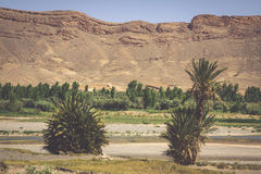 Free Wide View Of Canyon And Cultivated Fields And Palms In Errachidi Royalty Free Stock Photography - 66422687