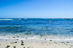 Wide view of the seashore at Algarrobo Chile. Wide view of the seashore with some seaweed at Algarrobo Chile Royalty Free Stock Photography