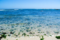 Wide view of the seashore at Algarrobo Chile. Wide view of the seashore with some seaweed at Algarrobo Chile Royalty Free Stock Photos
