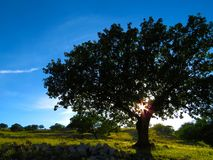 Wide View Tree and Green Grass during Daytime Stock Photos
