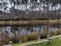 The trees, fence and the rippling lake at Woburn. Wide view of the trees being blown to the right along with a rippling lake. View includes the a partial fence royalty free stock photography