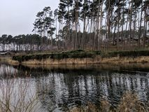The trees, sky and the rippling lake at Woburn. Wide view of the trees being blown to the right along with a rippling lake. View includes the river bank too stock photography