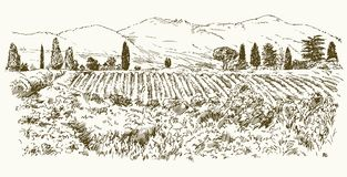 Wide view of vineyard. Stock Images